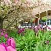 Spring is in Bloom all around Lake County!